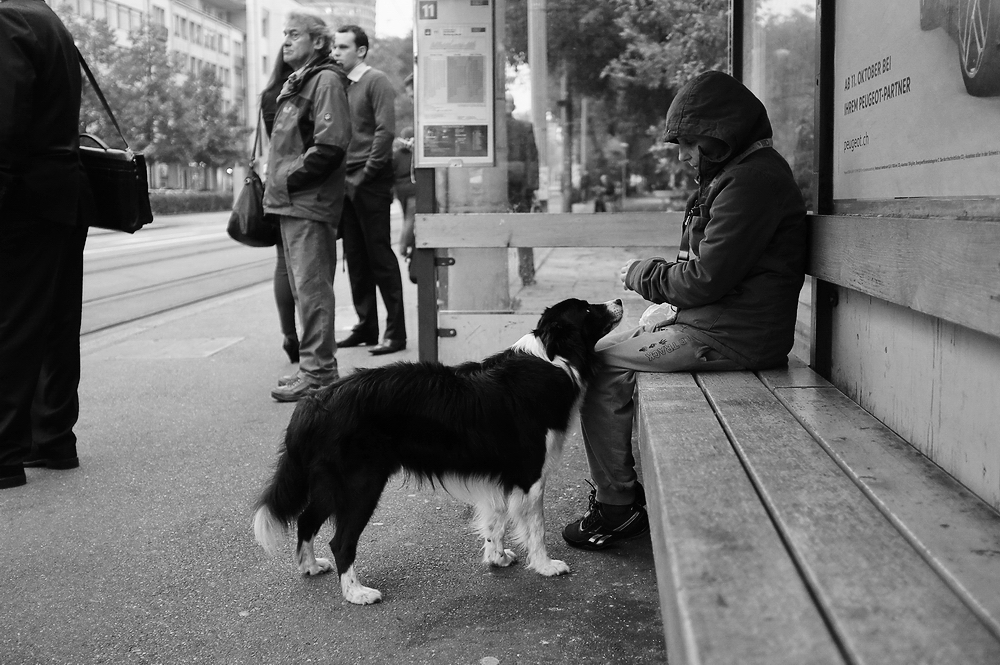 A dog interacts with an individual sitting on a city bench.